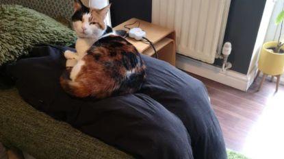 Koppel bedenkt manier om aanhankelijke kat Ziggy te misleiden