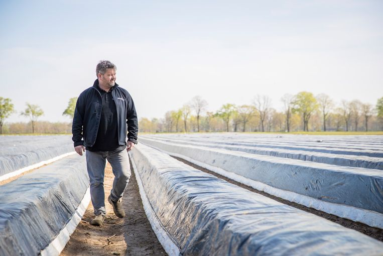 Aspergekweker Ron Martens is voortdurend op zoek naar goede seizoensarbeiders. Beeld Laurens Eggen