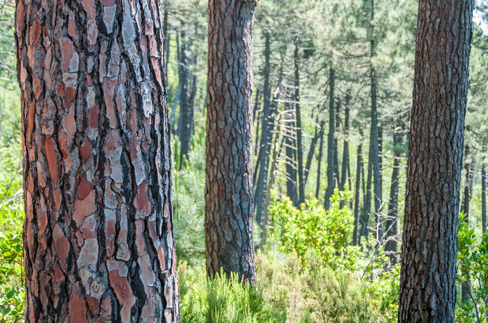 stockadr stockagenda bomen natuur bos buiten
