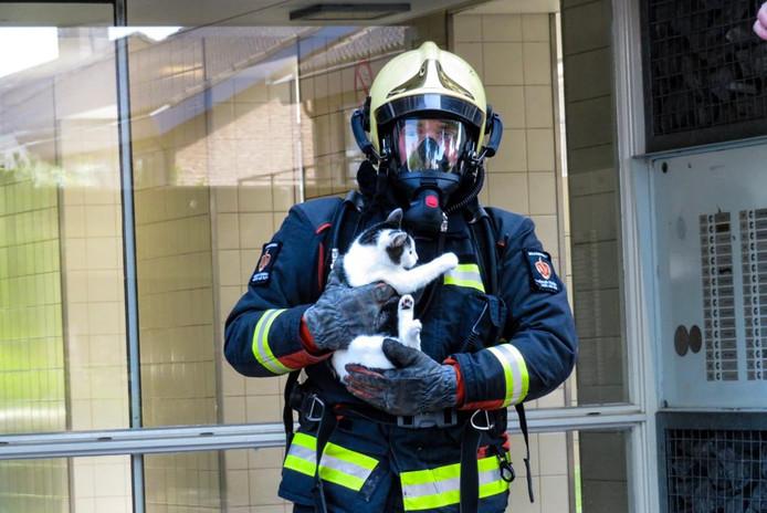 Een kat is gered uit de woning in Alphen