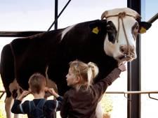 Biotechbedrijf gaat nazaten van wereldberoemde stier Herman (1990-2004) melken voor corona-medicijn