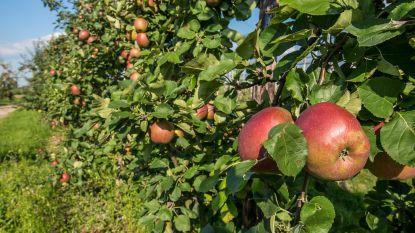 Grote appeloogst leidt tot overaanbod en lage prijzen