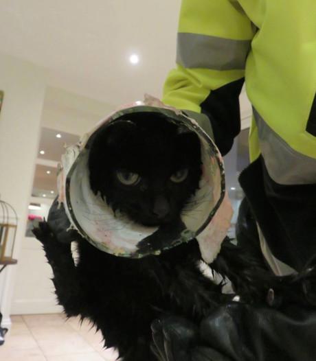 Kitten komt met kop in glazen pot vast te zitten en valt in vijver
