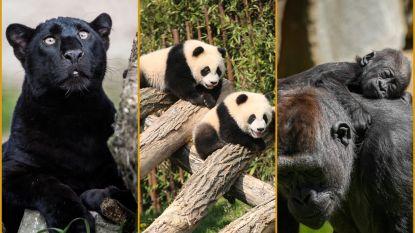Tripje naar de dierentuin? Must-sees voor de populairste parken op een rijtje