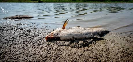 Drutense vissen leggen het loodje door hitte en zuurstofgebrek