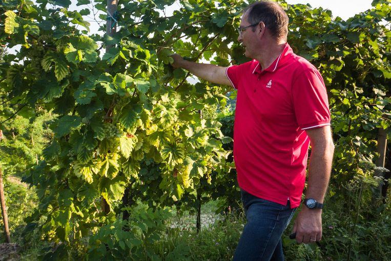 Innocente Nardi in zijn eigen wijngaard Beeld Nicola Zolin