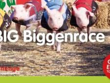 Geen biggenrace in Udenhout. Gemeente Tilburg trekt vergunning in