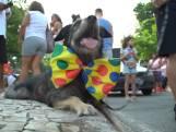 Honden verkleed voor optocht Braziliaans carnaval