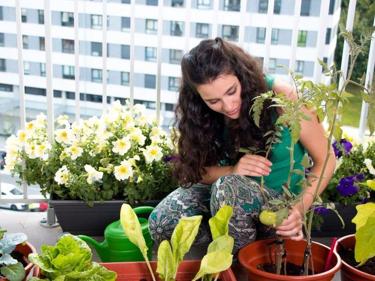 Heb je groene vingers maar geen tuin? Gelukkig is leven in het groen niet enkel weggelegd voor tuinbezitters. Tover je balkon of dakterras om tot een minibiotoop met deze tips van bouwsite Livios.