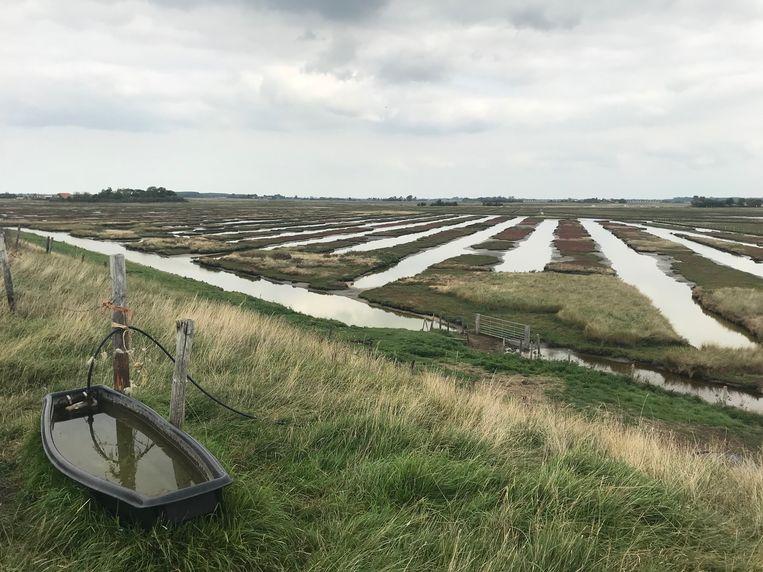 Karrenvelden aan de zuidkust van Schouwen Beeld Caspar Janssen