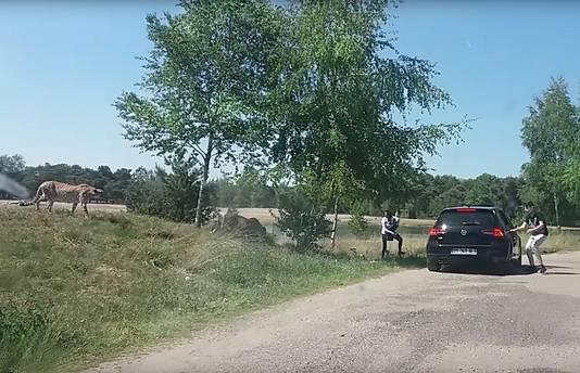 Franse toeristen stappen uit de auto tijdens safari Beekse Bergen