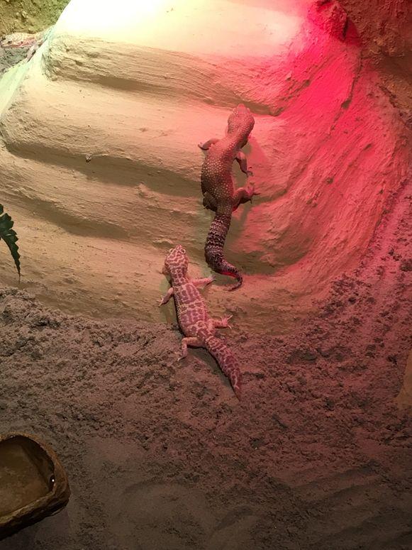 Nieuwe dieren in dierenopvangcentrum De Zonnegloed
