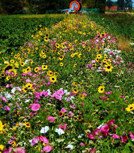 Plan voor wandelpad, bloemen of poelen? Er ligt subsidie klaar