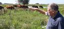 Cor Spierings bij zijn Brandrode vee.