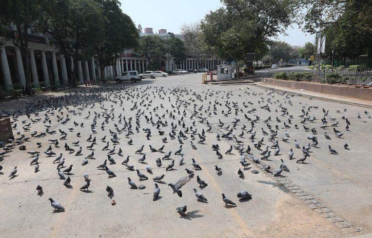 Duiven bij Connaught Place, normaal gesproken een druk winkelcentrum in het hart van New Delhi.  Beeld EPA