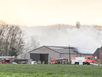 Brand op boerderij in Etikhove krijgt gerechtelijk staartje: parket onderzoekt of in loods cannabis werd gekweekt