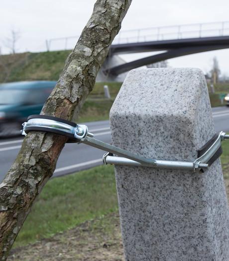 Metalen beugels moeten 1.300 bomen Witte Lint op hun plek houden