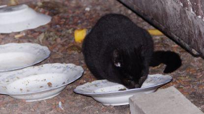 Steeds meer zwerfkatten in Wommelgem: vzw Zwerfkat zoekt dringend extra helpende handen