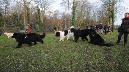 Gemeente opent nieuwe hondenweide achter Staels-site