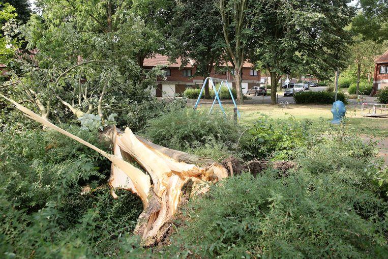 Een boom belande net naast de speeltuin in de Labbeekstraat tijdens de storm donderdagavond in de wijk Windmoleken..