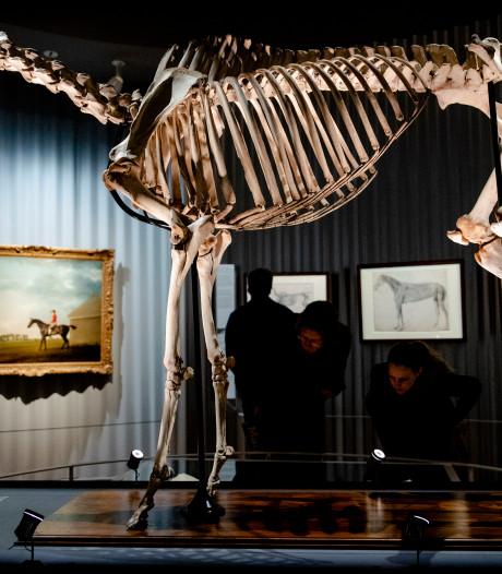 Mauritshuis toont een van de succesvolste renpaarden en dekhengsten uit de geschiedenis