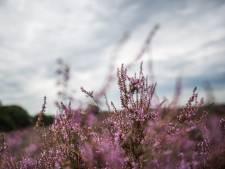 Natuurmonumenten rekent kosten voor maken trouwfoto's op Posbank