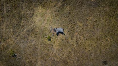 Gruwelijke foto toont olifant met afgehakte slagtanden en slurf