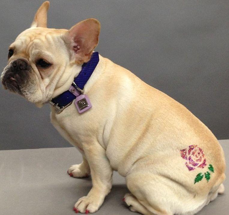 Absurde Trend Bij Honden Kristallen Tattoos Familie