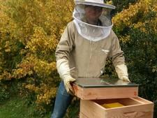 Bijen vinden ook huis in Corlaer