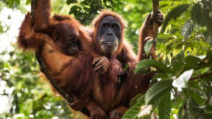 """WWF: """"Het is 1 voor 12 om de planeet te redden"""""""