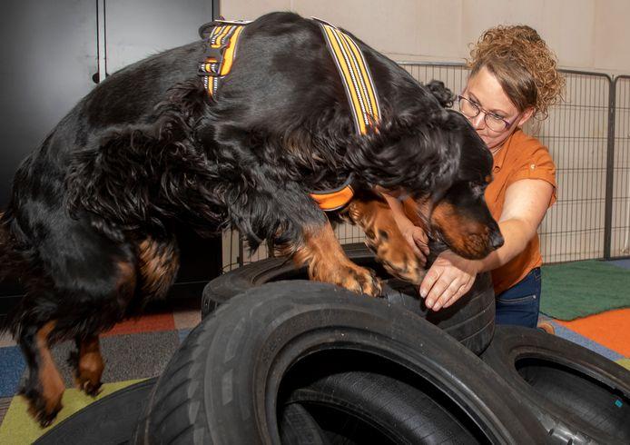 Mieke de Boer van de hulphondenschool traint een van haar honden.