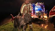 Brandweer haalt 90 kilogram zware kolos uit Scheldeslib