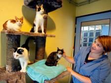 Bazin overleden: asiels opgescheept met 44 katten, 3 konijnen, 2 cavia's en 5 geiten