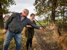 Boer uit Geesteren ziet brood in hert en horeca