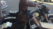 Oldtimerdieven op pad: dader takelt Kever van parking restaurant, later ook Harley gestolen