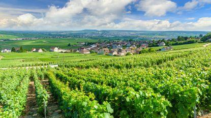 Zelfs Franse wijnboeren hopen op wat regen