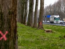 Platform wil hout van 1750 bomen langs A2 duurzaam gebruiken in de regio