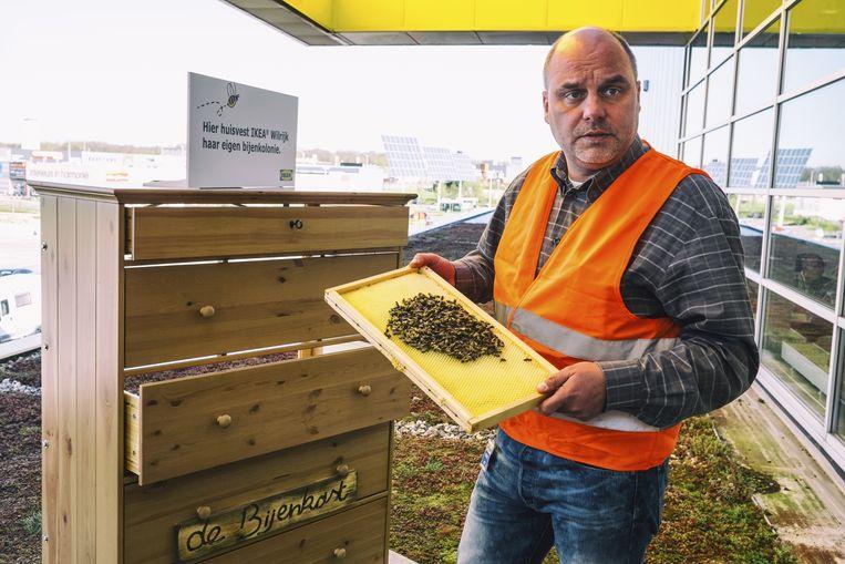 Professioneel imker Rik Janssens op het dak van Ikea in Wilrijk toont enkele exemplaren bij de nieuwe bijenkasten.