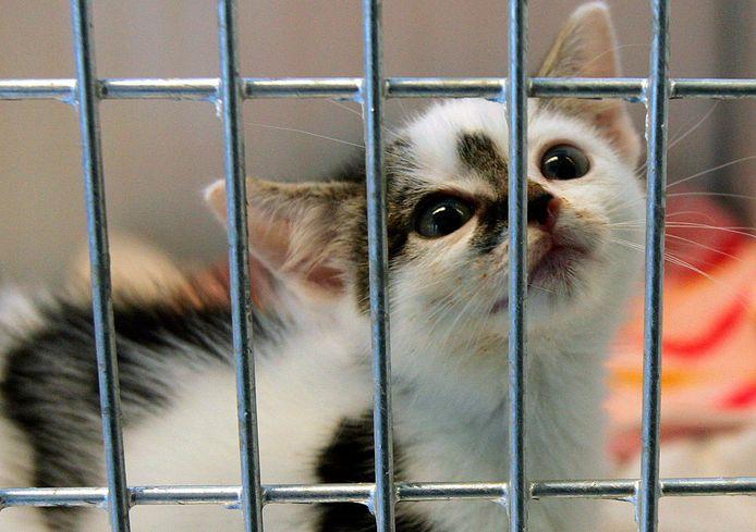 Tijdens de intelligente lockdown steeg de vraag naar kittens enorm.