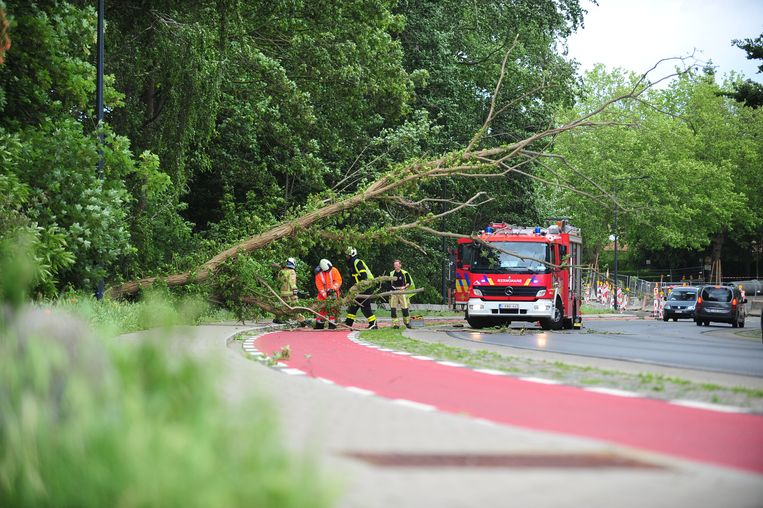 De boom dwarste de weg.