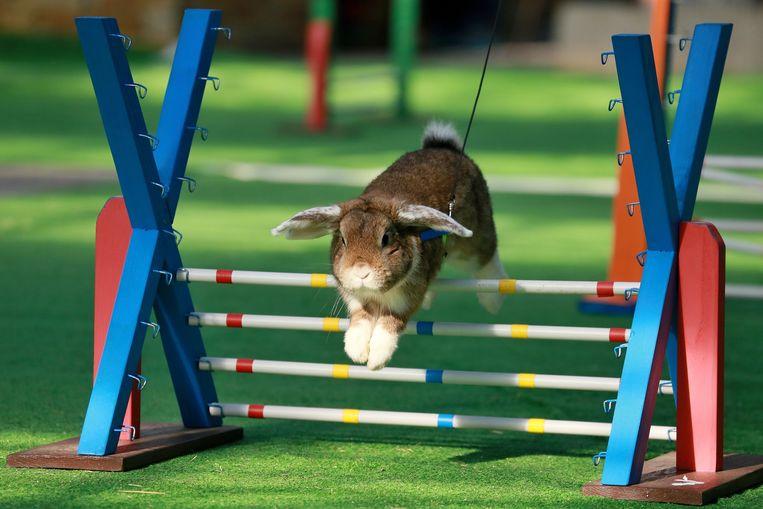 In Oh'Green kan je een konijnenjumping aanschouwen.