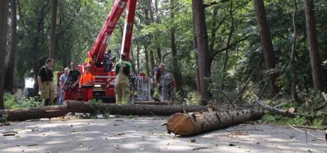 Naweeën van noodweer boven Lunteren: brandweer kapt vijf gevaarlijke bomen