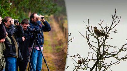 """Stormloop voor lijster die al 64 jaar niet meer werd gezien in Vlaanderen: """"300 km gereden om deze vogel te spotten"""""""