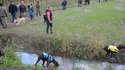 Hondenlosloopzone op komst ter hoogte van Dijkstraat