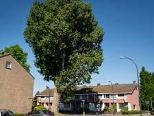 Weer verzet tegen kap Borkse Bakenboom: populier in Waalwijk gaat niet meteen om