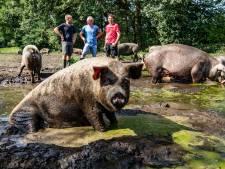 Zeugen van Overesch houden hoofd koel met bad in modderpoel