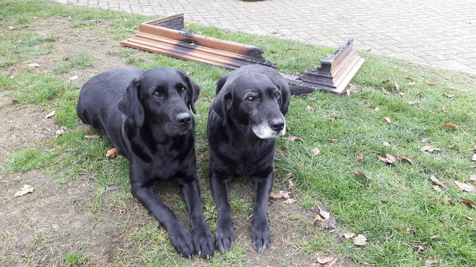 Reddende hond Indy (rechts) en haar dochter Beau bij de restanten van de schouw.