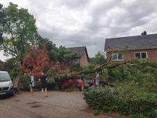 Bomen vallen als luciferhoutjes tijdens kort maar hevig noodweer