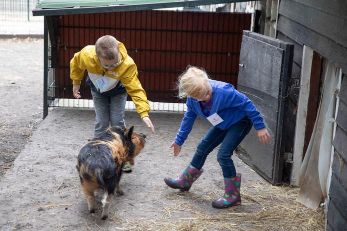 Een varken wordt door twee cursisten naar zijn hok gedirigeerd.