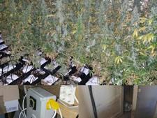 160 oogstrijpe planten in wietkwekerij Zevenaar